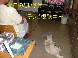 2006_0829daidai0027.jpg