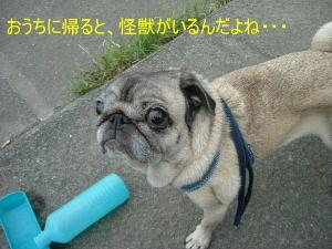 2006_0912genjitu0009b.jpg