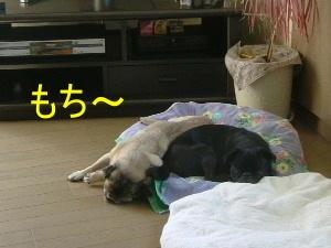 2006_0925dora0002.jpg