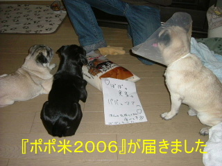 2006_0928wel0017b.jpg