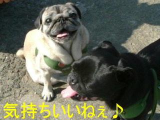 2006_0929megumi0045b.jpg