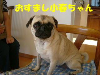2006_1017kani0022b.jpg