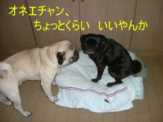 2006_1019koto0015b.jpg