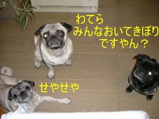 2006_1020kiku0005b.jpg
