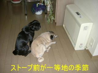 2006_1101kawa0001b.jpg