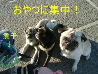 2006_1101kawa0002b.jpg