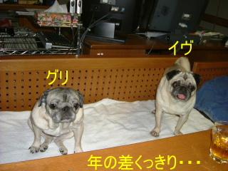 2006_1113eve0006b.jpg