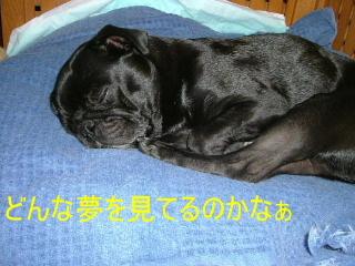 2006_1114daiku0010b.jpg