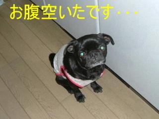 2006_1116ebi0021b.jpg