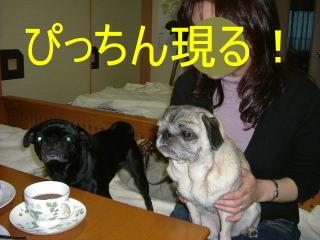 2006_1120hiro0007b.jpg