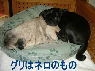 2006_1123buchi0026.jpg