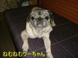 2006_1130guri0001b.jpg