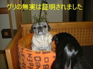 2006_1208yuki0014b.jpg
