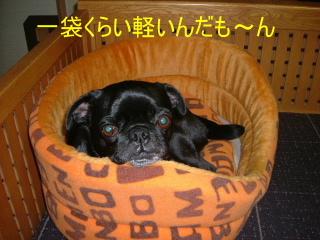 2006_1208yuki0016b.jpg