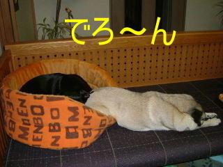 2006_1210nemu0015b.jpg