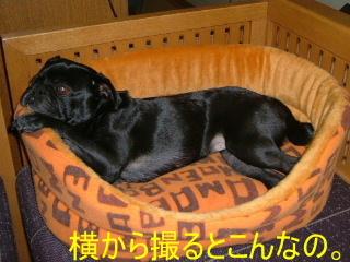 2006_1213kado0004b.jpg