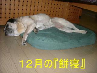 2006_1219nemu0010b.jpg