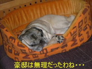 2006_1224kawa0001b.jpg