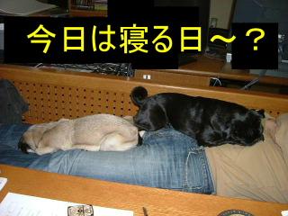 2006_1226neru0001b.jpg