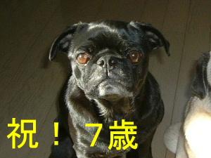 2007_0117hinata0002c.jpg