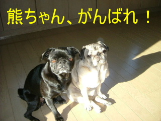 2007_0117hinata0003b.jpg