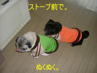 2007_0118jyaji0001b.jpg