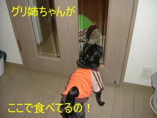 2007_0118jyaji0004.jpg