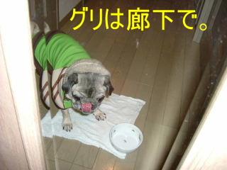 2007_0118jyaji0006b.jpg