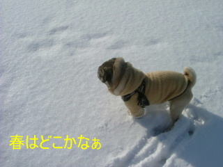 2007_0121yuki0002b.jpg