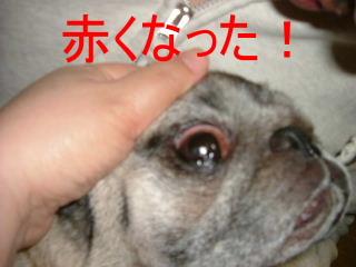 2007_0131aka0002.jpg