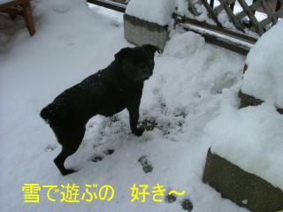 2007_0208yuki0003.jpg