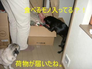 2007_0221nimotu0002b.jpg