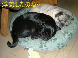 2007_0222cyacya0017b.jpg