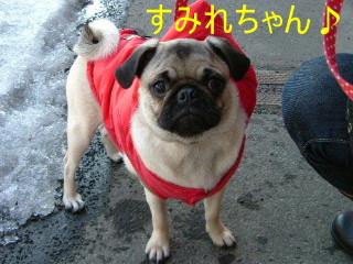 2007_0227sumire0001b.jpg
