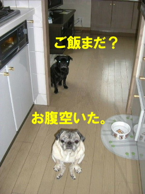 2007_0402haru0038b.jpg