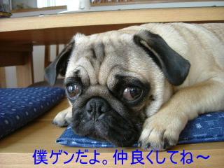2007_0413onsen0040b.jpg