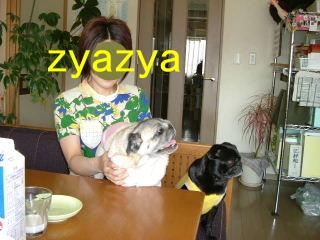 2007_0425zyazya0003b.jpg