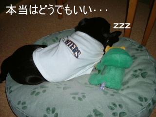 2007_0606ham0011.jpg
