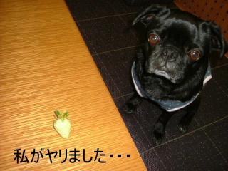 2007_0607rito0009b.jpg