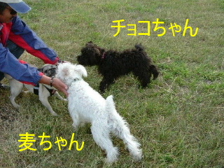 2007_0719mugicyoko0009.jpg