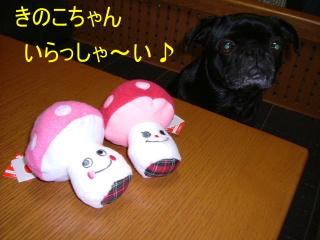 2007_0720suki0013b.jpg