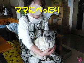 2007_1028netoru0011b.jpg