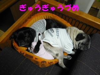 2007_1103netoru0008b.jpg