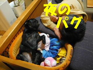 2007_1125yah2au0002.jpg