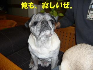 2007_1125yah3au0113b.jpg