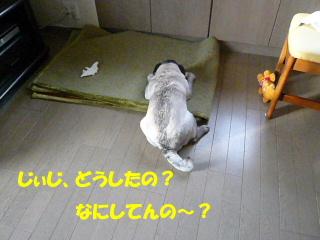 2007_1226buz0001b.jpg