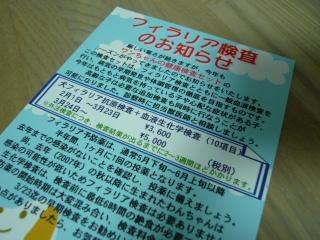 2008_0130chiwa0013.jpg
