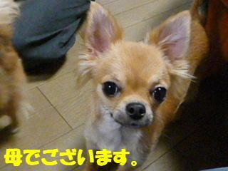 2008_0130chiwa0029b.jpg