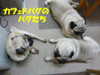 2008_0217jij0047b.jpg