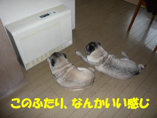 2008_0228fuyu0002.jpg